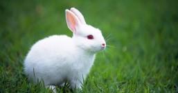 从小养到大的兔子丢了,这个中秋节过得不怎么好