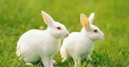 兔子真难养,怀念两只小兔子
