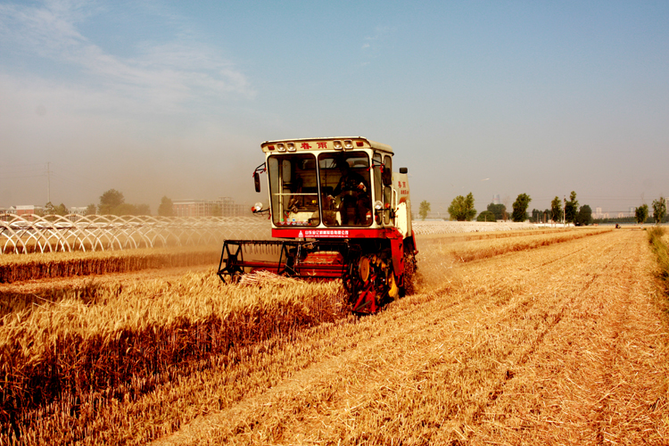收割机收小麦