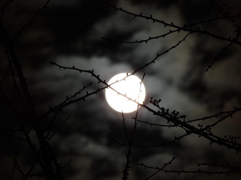 夜已深了,月亮升起来了
