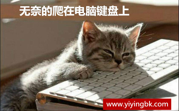 无奈的爬在电脑键盘上,一点精神都没有了。
