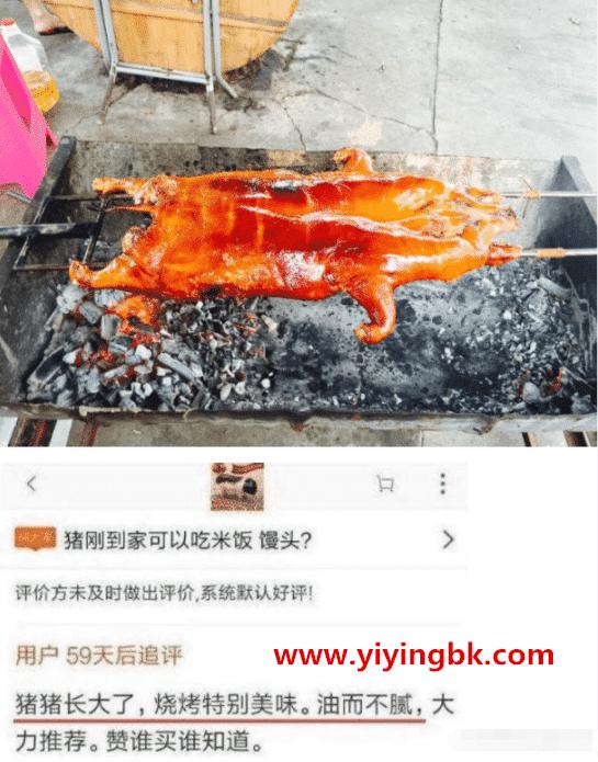 烤网购长大的小香猪,也就是宠物猪。