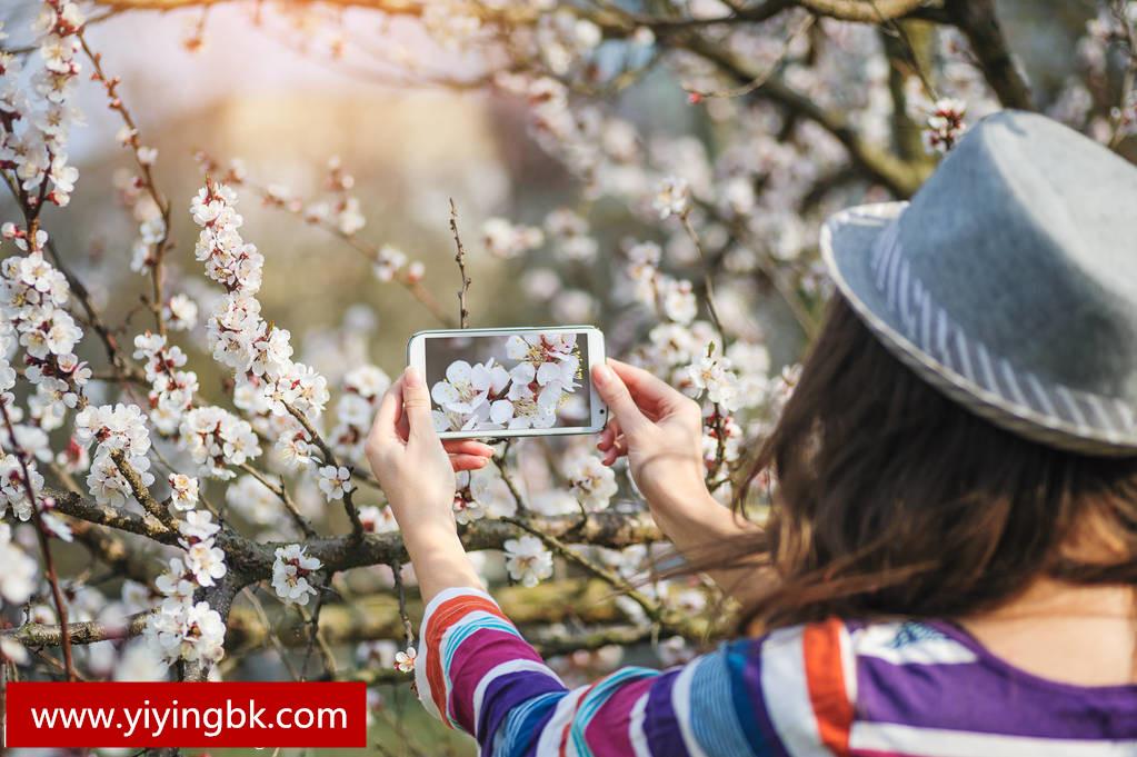 美女拿起手机对着花拍几张照片