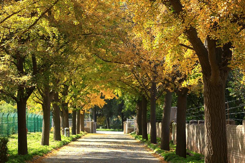 秋天来了,www.yiyingbk.com