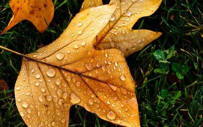 秋天的树叶变黄了,这是秋天的植物。www.yiyingbk.com