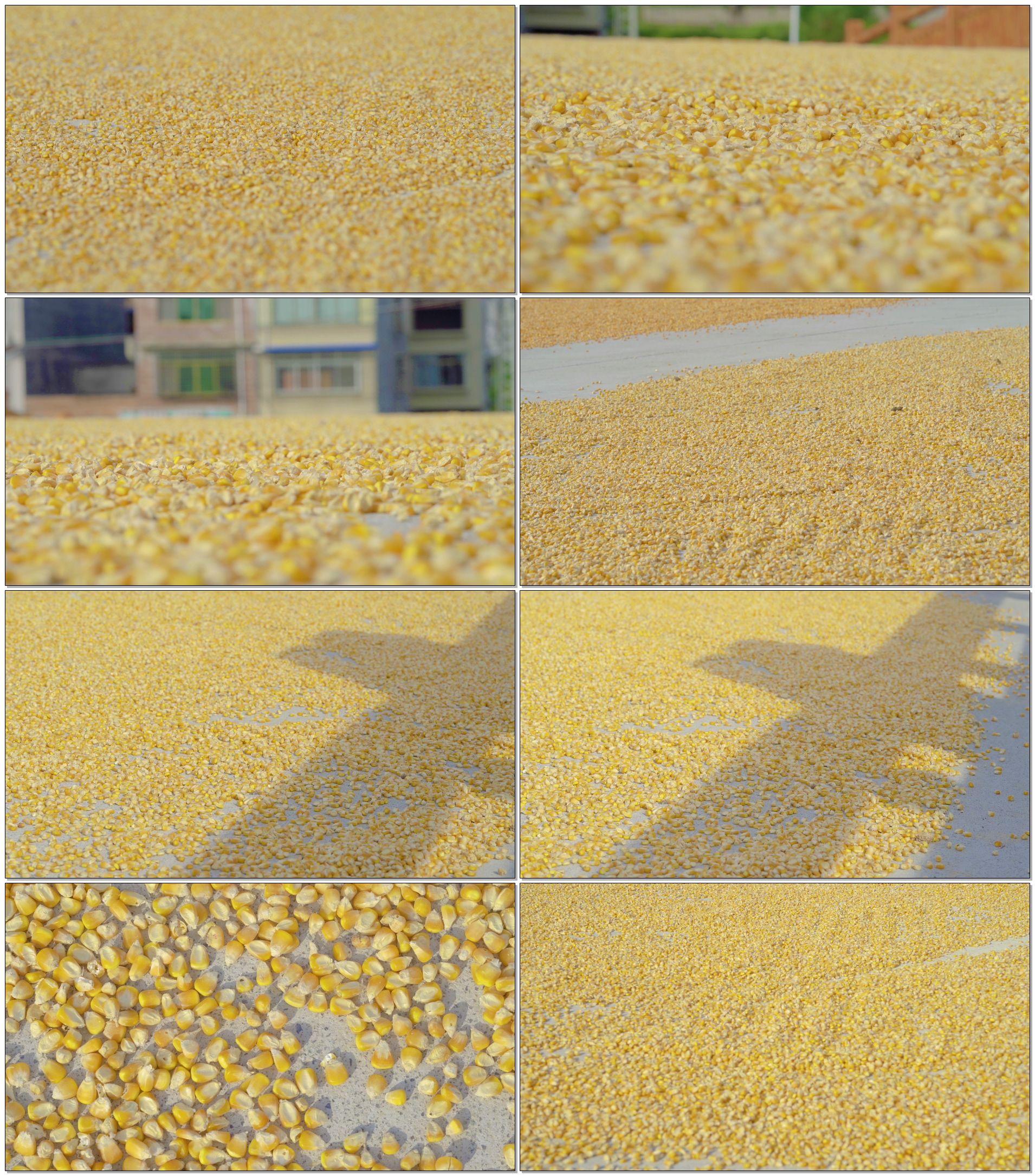 晒玉米粒,www.yiyingbk.com