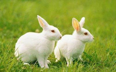 两只小兔子,www.yiyingbk.com